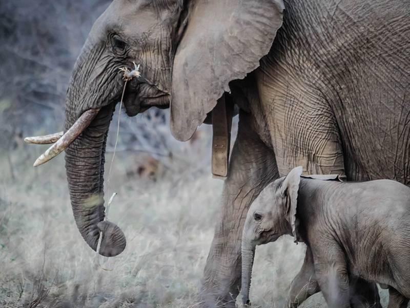 News -Monitoring of illegal trade in ivory and other elephant specimens - ETIS Report of TRAFFIC