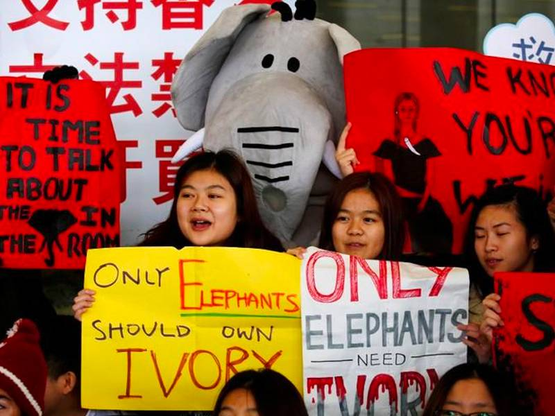 News -Hong Kong lawmakers, following China, vote to ban ivory sales