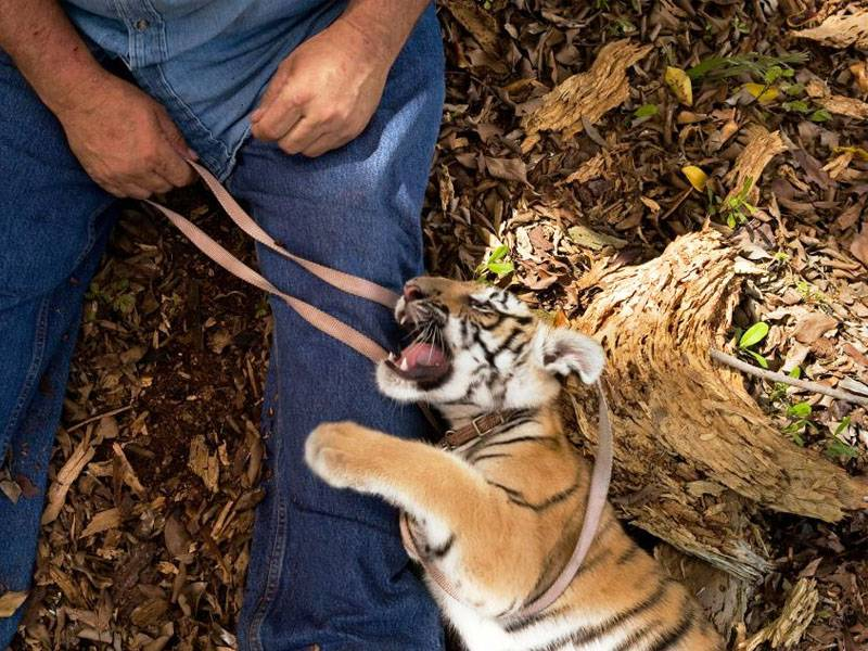 News -Google, Facebook, and Other Tech Giants Unite to Fight Wildlife Crime Online