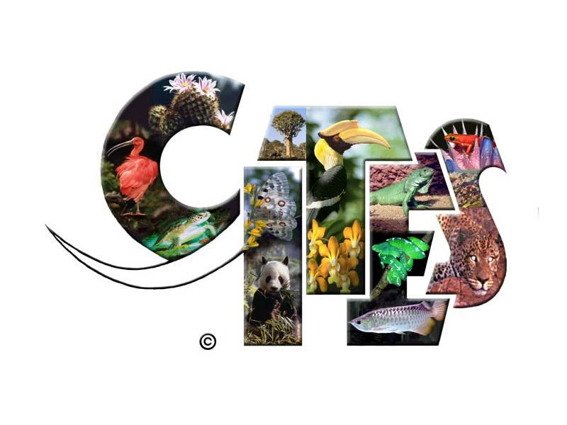 News -Cities COP 17: Demand reduction strategies to combat illegal trade in CITES-listed species