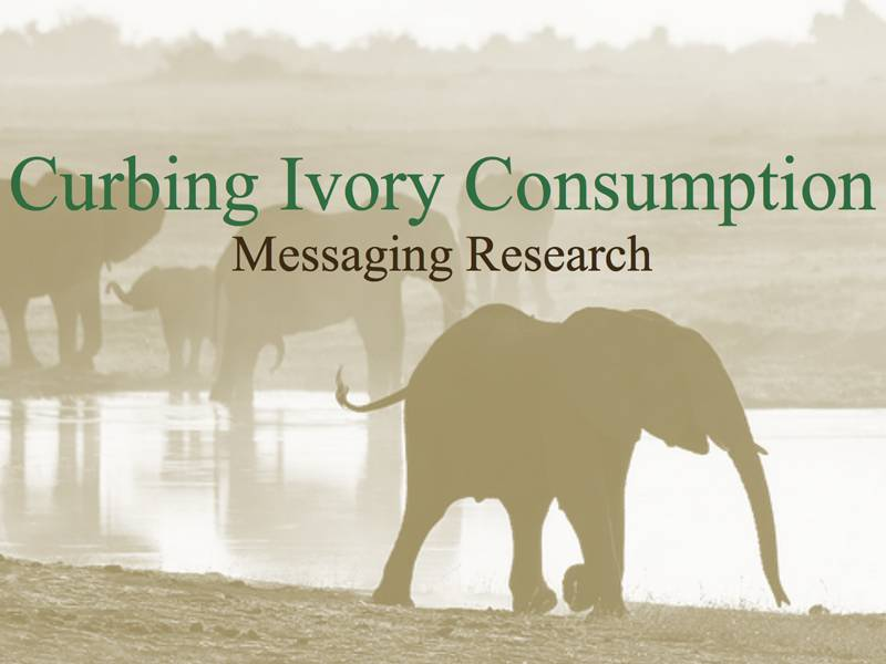 News -TNC Ivory Messaging Research Findings to Curb Ivory Consumption in China