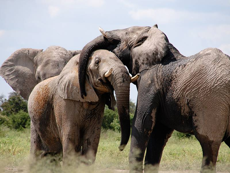 News -TNC Messaging Research Executive Summary to Curb Ivory Consumption, Chinese Language