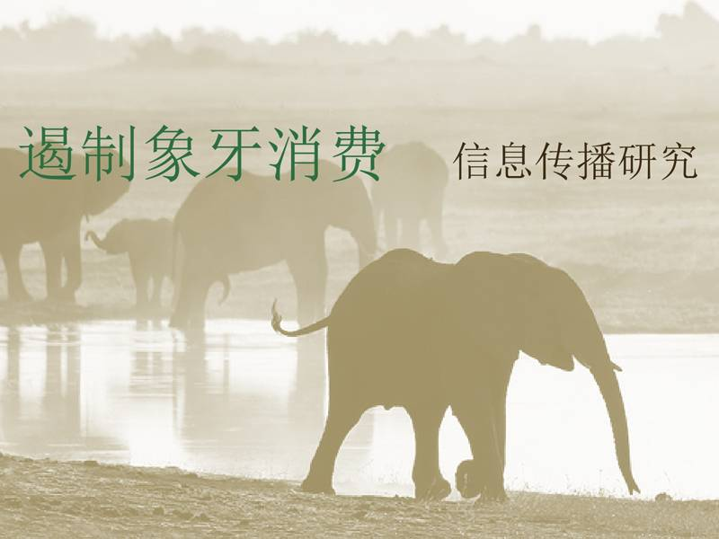 News -TNC Ivory Messaging Research Findings to Curb Ivory Consumption in China, Chinese Language